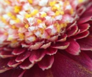 bloemen_sugarframe-300x250