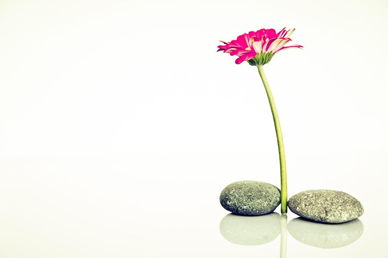 balans vinden