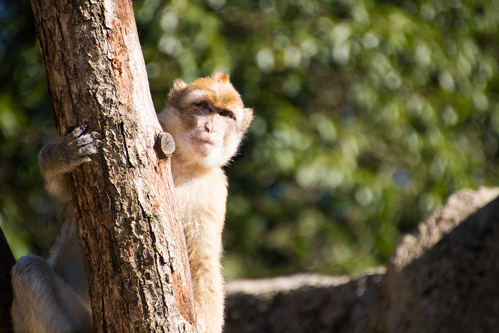 apen fotograferen