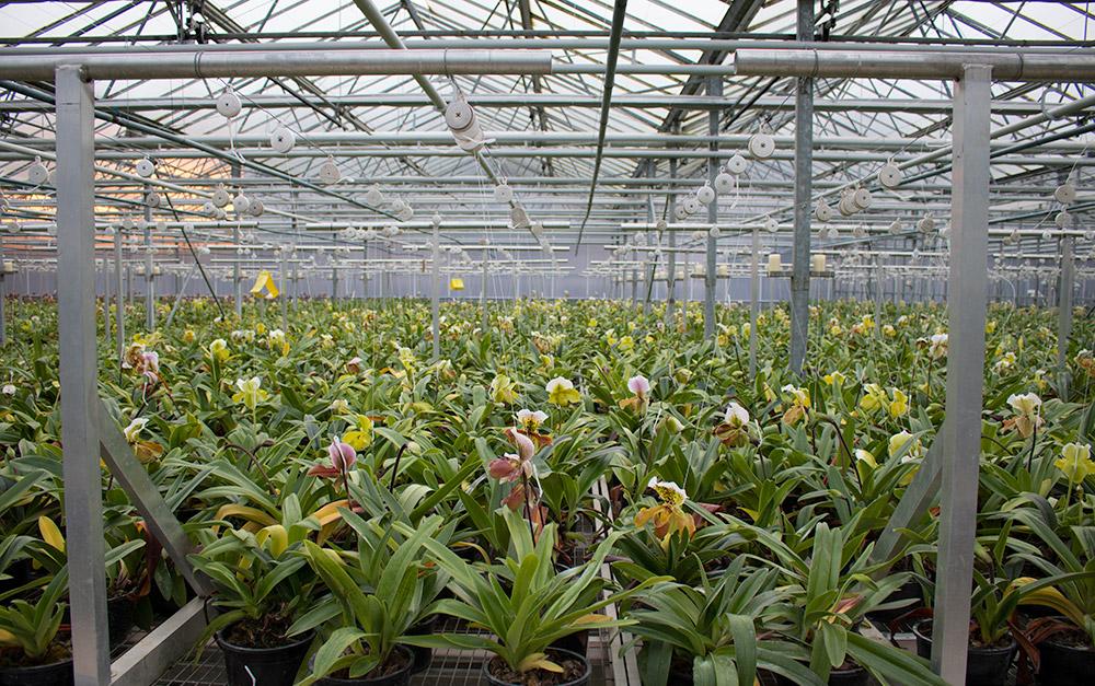 orchideeenkwekerij