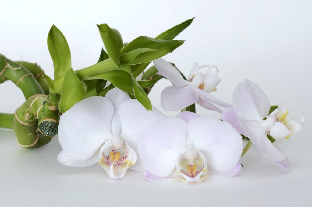 orchid-2115258_1280-1024x682