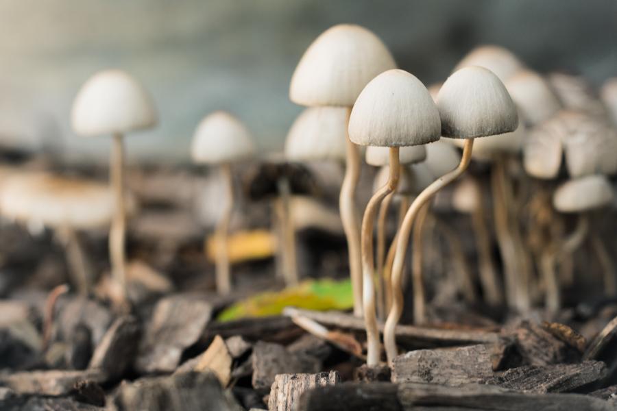 paddenstoelen-3
